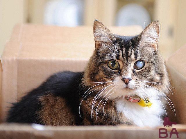 Причина появления катаракты у кошек